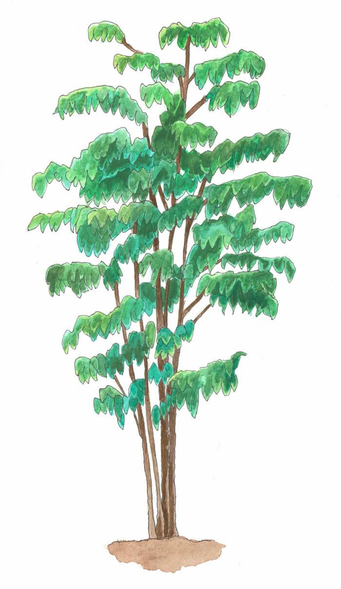 大型の品種になると花の直径が人の拳ほどの大きさになり迫力満点。葉は縁が少し波打っており、葉脈が湾曲するように走っているのが特徴です。
