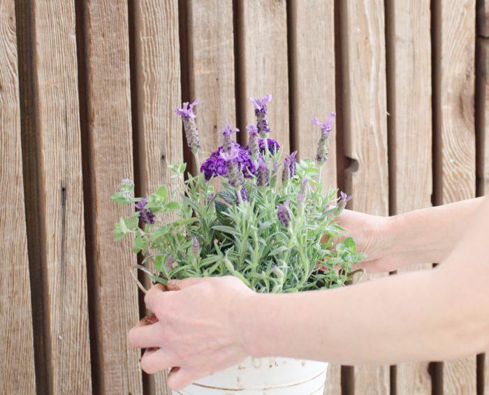 ⑤タイムは2つ使用する。まず、小花のタイムを右と左に植える。植えた後に左右のバランスを確認する。