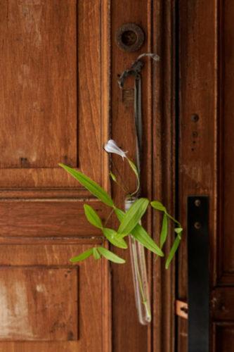 「吊るして、生ける」で使用した花材・道具 花材:クレマチスピエロ 道具:試験管(フチ付き)、裂き布、両面テープ