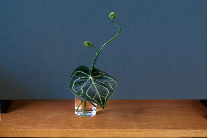 「ワントーンアレンジ」で使用した花材・道具 花材:アンスリウム・シロシマウチワ、アンスリウム・スネークボール 道具:器