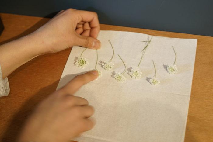 1. 花を切り、ティッシュの上に並べて指先で押さえて形を整える。