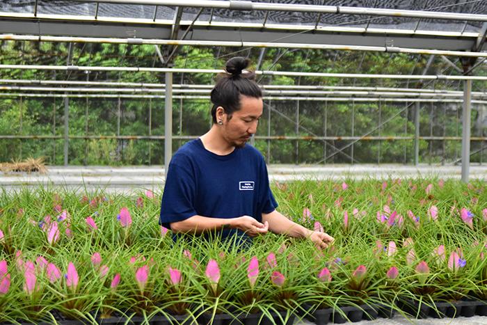 キアネアの花を摘む近藤さん。