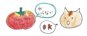 比較的乾燥気味に管理するトマトやスイカは、そこまで水を必要としていない場合があります。