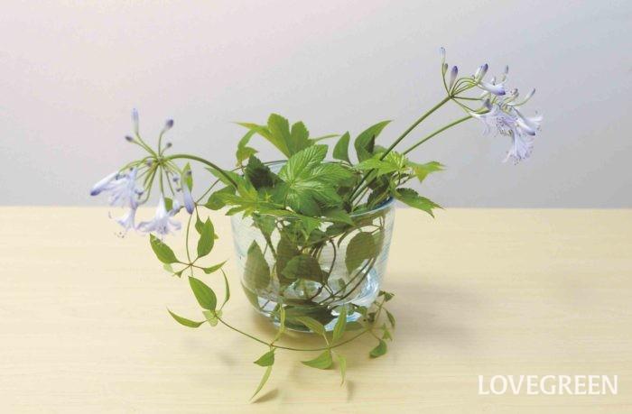 生ける支点を大切にしよう 写真のように生ける支点が違うとどこかチグハグな印象に。同じ花材を生ける場合、支点を意識するとワンランク上のあしらいになります。