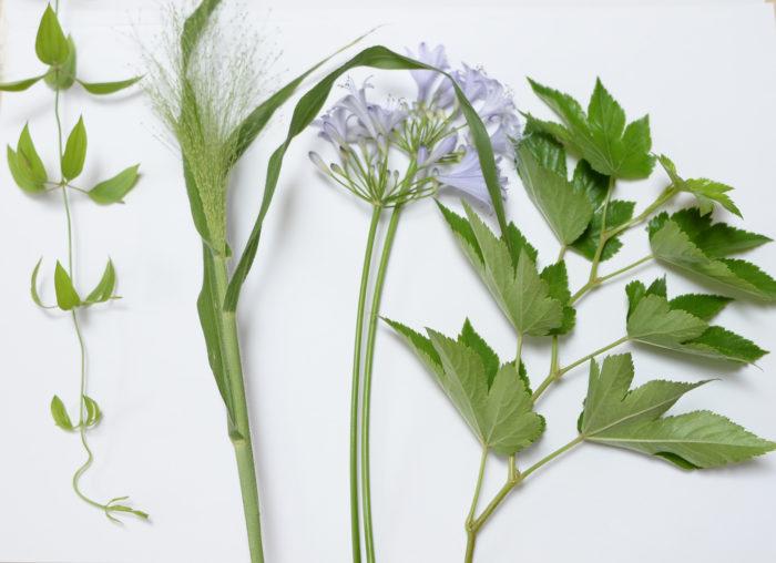 利休草 スモークグラス アガパンサス 木苺 口の大きな花器(ガラスのサラダボウルなどで代用しても◎)