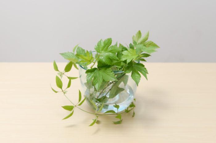 3、 木苺を花器より少し高い花丈でカットし、花器の縁を隠すように生ける。