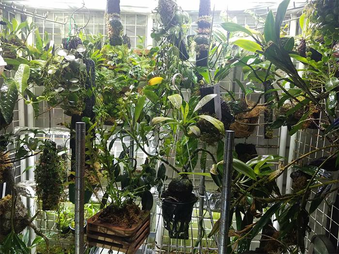 温室の一部の様子