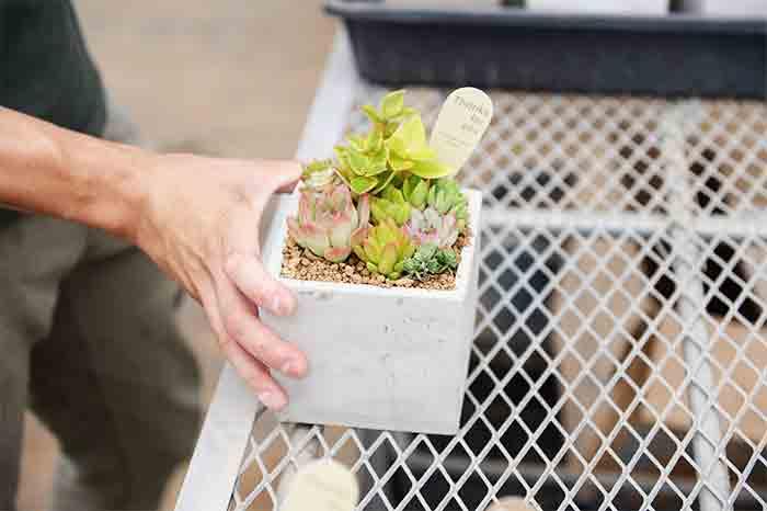 カクト・ロコの寄せ植えは担当スタッフがひとつひとつ作っています。下葉が傷まないようにと直接葉に触れる表面の土にも工夫が。プレゼントとしても人気です。