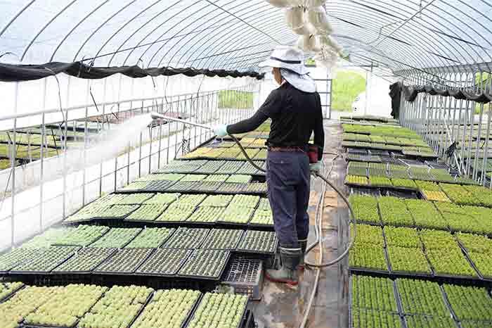 植物の状態やそれぞれの特徴に合わせて水やりは調節が大事です。水の量が偏ったり、やりすぎたりしないように、水やりも手作業で行っています。