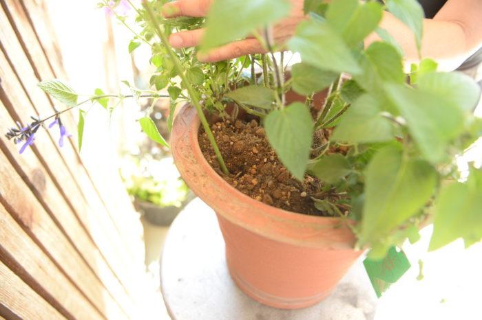 突き棒・・・土に刺しくるくると回し土が十分に入っているかチェックします。割りばしや菜箸でもOK