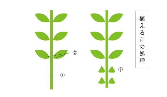 植える前の処理