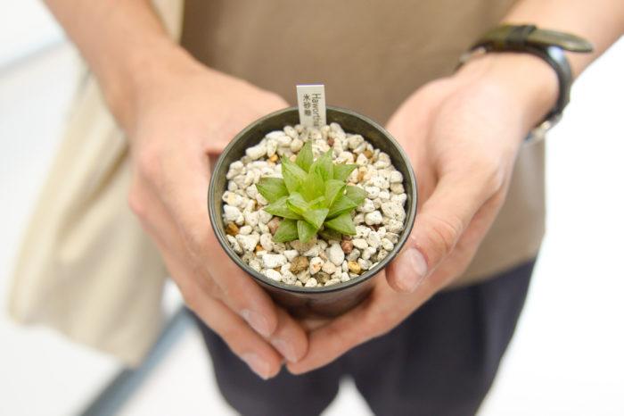 笑顔が眩しいゆうきさん、この日が初めての植物デビューの日!チョイスした植物はハオルチアの「氷砂糖」。透明感のあるみずみずしい葉と氷砂糖という名前のハーモニーが美しい多肉植物です。