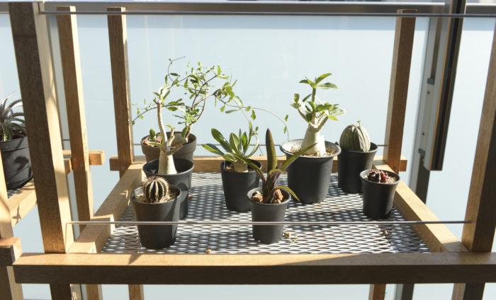 自分で制作したという植物棚はそのまま水やりができるように底面に穴が空いています。