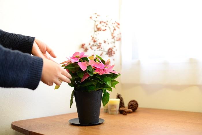 冬の間は、10℃~25℃を保つことのできる室内の日当たりの良い場所が適しています。 また、暖房などの空調の風が直接当たるところは避けましょう。