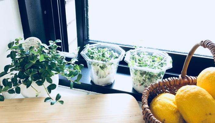 ベランダや畑で野菜を作っていなくても、ご自宅のキッチンでできる家庭菜園があります。 それがスプラウト栽培! 家にあるものを使って、今すぐにでも始められるキッチンガーデンです。 短期間で収穫できることも魅力の一つですね。 楽しみながらスプラウト栽培をして、一品おかずを増やしちゃいましょう♪