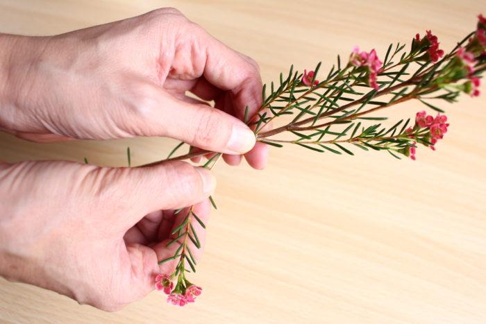 4、 ワックスフラワーの下葉を取り、右後ろに生ける