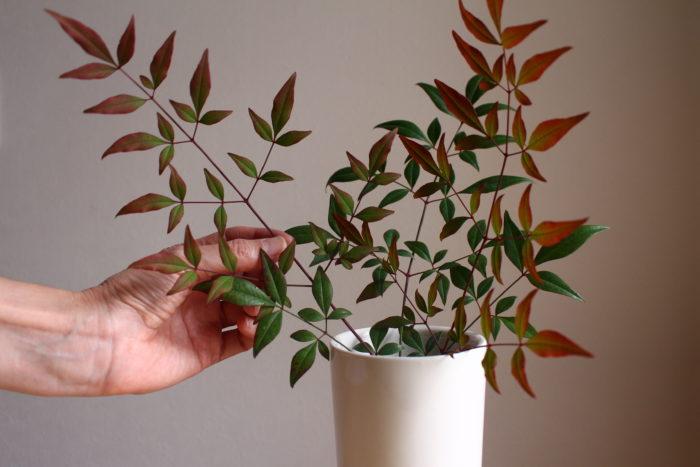 1、 ナンテンの葉を、花瓶の後ろの方に生ける