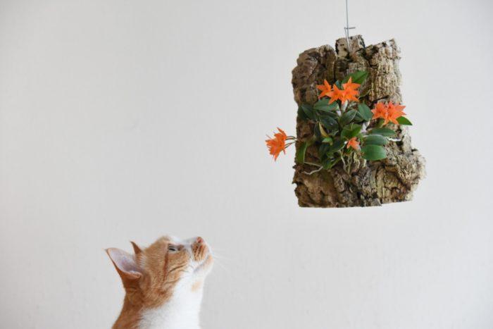 セルヌアを見上げる猫とのツーショットが素敵