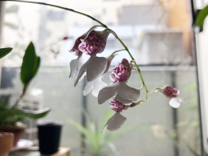 ころんとした可愛らしい花びらにうっとり