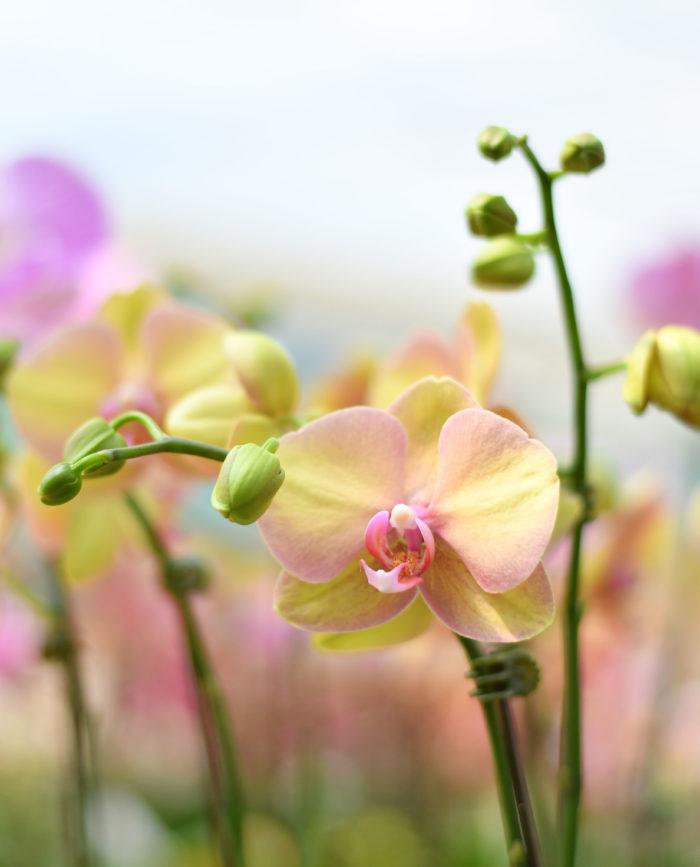 イエロー×ピンクの花びらで優しいムードに