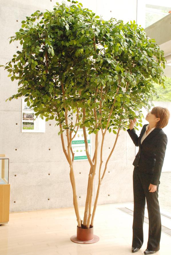 大きく ならない 観葉 植物