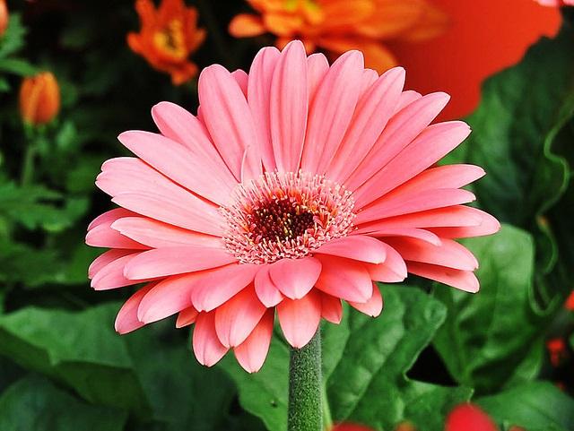 2 月 誕生 花 365日誕生花カレンダー(生まれた日の誕生花)