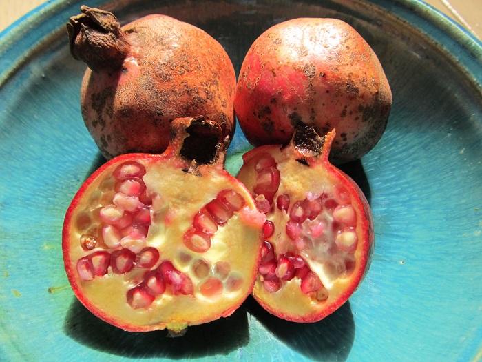 ザクロの実を割ってみると、真っ赤な粒粒がたくさん詰まって整列しています。これがザクロの種子であり、真っ赤な部分を種衣(しゅい・仮種皮かりしゅひとも呼ばれます)と言いますが、この部分を食用にします。