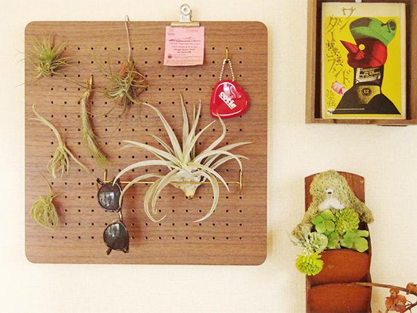 散らばりがちな小さなチランジアもひとつにまとめてディスプレイ。植物のかたちをうまく使ってフックに引っ掛けます。水やりの時は外してあげてください。