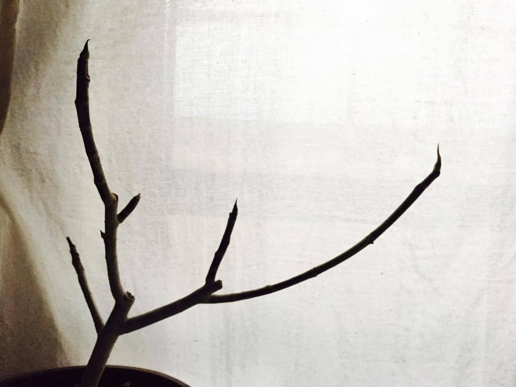 もしかしたら、いや、もしかしなくてもこれは新芽ではないでしょうか!  期待と一抹の不安を胸に宿しながらじっと待ちます。  そしてついにその日がやってきました…。