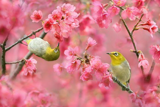 〜清明〜  春の陽ざしを受け、天地万物が清らかな明るさに輝く季節です。本格的なエディブルガーデンのスタートです。より多くの種類の種をまくことができます。