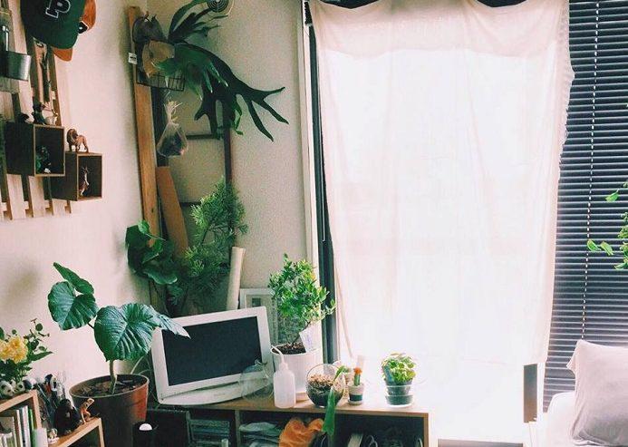 窓の有無や光の入り方は、どのくらい? 植物を育てる上で、風通しや陽の入り方は大切なポイント。日が足りないと、ひょろひょろとした姿になってしまったり風通しが悪いと虫が湧いてしまったり、病気になってしまいます。  お部屋の環境を見極める 室内のそれぞれの環境もあるので自分の暮らす部屋の環境に合うかも見極めないといけません。日当たりや風通し、窓辺はスペースがあるか、水をあげられるスペースなど。