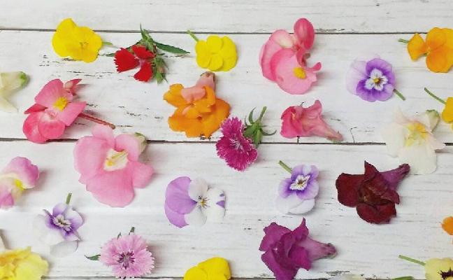 エディブル(Edible)とは、「食用に適する」という意味の英語です。エディブルフラワーとは、食べられる花を意味します。  食卓に彩りを加えるために使われるものを指し、ブロッコリーやカリフラワーなど花の部分を食用にするもの全てを含みます。