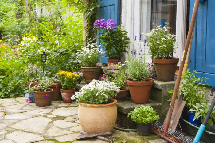 まずはじめに、鉢が適切なサイズよりも大きいとき、小さいときのメリットとデメリットをご紹介します。  鉢が大きいとき ○根を広く張れるので、大きく育つことができる  ○保水量が多くなるので水やりの間隔をあけられる  ○夏場の水切れが起こりにくい  ×土の量が増え、重くなる  鉢が小さいとき ○狭いスペースでも育てられる  ○株をこれ以上大きくしたくないときには有効  ○土の量が少ないので軽く、移動がしやすい  ×水切れが起こりやすく、こまめな管理が必要  ×根が詰まりやすく、株が大きく育たない