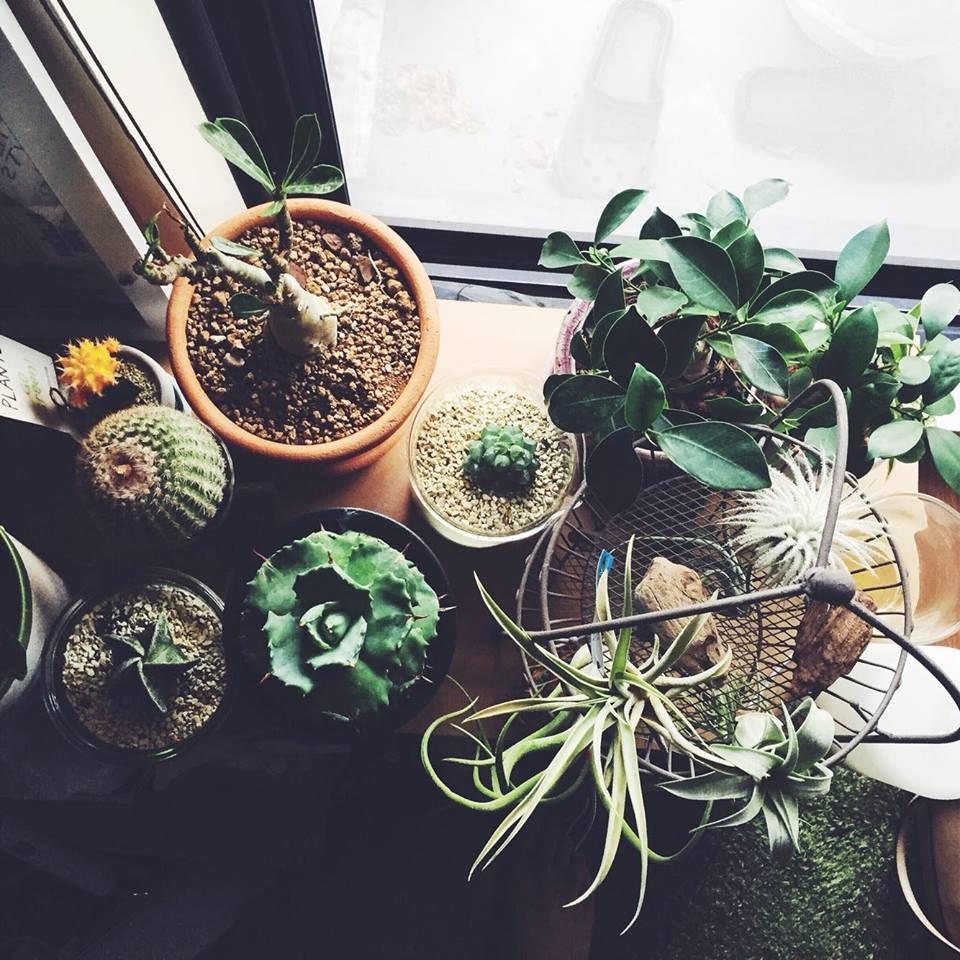 植物を育てる上で、愛情を注ぐことは、お水をたくさんやることではなく植物に時間をかけてあげること!  植物の様子を毎日観察することが愛情を注ぐことだと思います。水が足りないと、葉っぱにハリがなくなったり、いつもと違う触感だったり。お肌と一緒ですね。水をあげすぎると、土が乾かず根が腐って枯れてしまう可能性もあります。