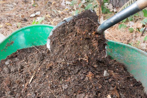 だんだん収穫も落ち着き休眠期の始まりです。地上部が枯れて根の状態で冬を越す宿根草です。凍結しそうな場合は、株の上に土を少し多めに盛るか、腐葉土をかけるかして防寒対策をしましょう。
