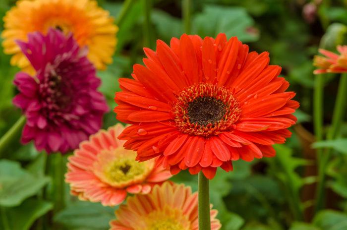 10月の誕生花一覧|誕生日の花と誕生月の花・花言葉 | LOVEGREEN(ラブ ...