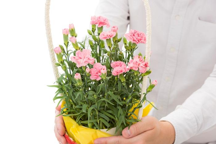 いかがでしたか?  母の日の鉢植えのお花選びに役立てばうれしいです。母の日に鉢植えのいいところは生花よりも長く楽しんでもらえること。母の日ギフトで出回る鉢植えは様々な大きさがあるので、お母さんに合ったサイズや種類のお花を見つけてみてくださいね。