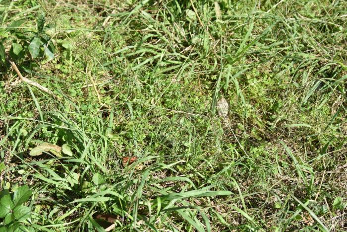 カメムシはどんな植物にも発生しやすいので、自分だけ防除していても飛来してきて増えていきます。雑草が生い茂っている場所が発生源になる種もいます。