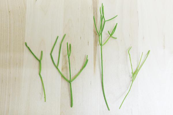 lip3リプサリスは挿し木で増やすことができます 今回はカッサスを例にします。カットした切り口を発根するまで乾かします。だいたい、2、3週間~1カ月で発根しました。発根したら、乾いた土に差します。水をあげて風通しのよい場所で管理しましょう。葉先が乾燥してきた場合は霧吹きで葉水を与えましょう。その後は土が乾いたら水やりをします。