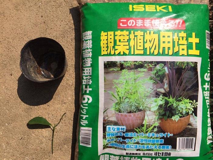 土は観葉植物用の土や赤玉土にバーミキュライトを少量混ぜたものなど、水はけ・水もちのよいものを用意します。挿し木用の土として売られているものもあります。