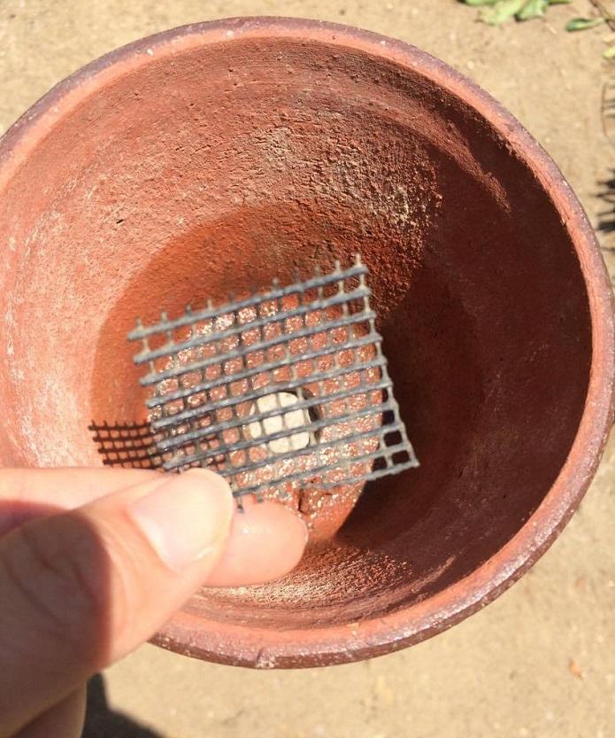 排水性のいい土に植えるとどうしても穴から土が出てしまいます。それを防止するためにネットを敷きましょう。ホームセンターで40円前後で購入できます。