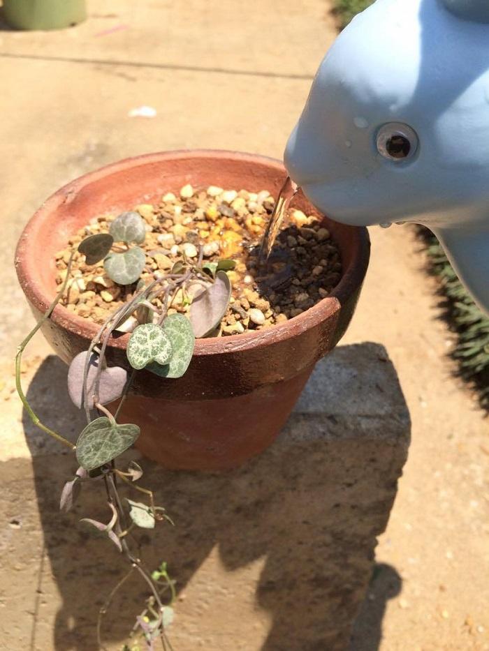 植え替え後はたっぷりお水を。