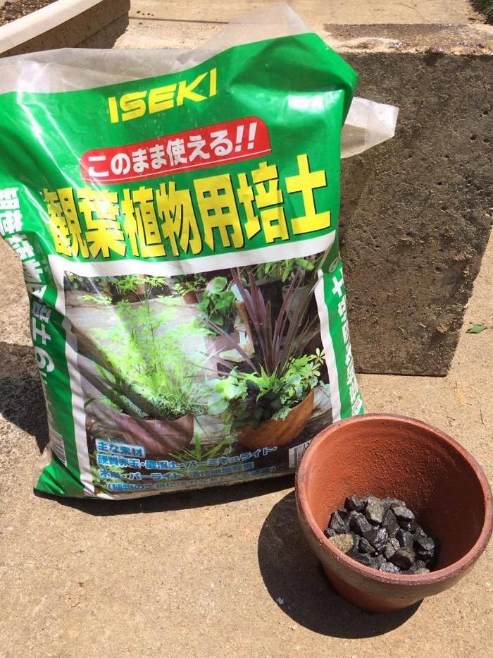 土をいれます。  初めての方は観葉植物用土が肥料なども配合されているので手軽でおすすめです。もしくは多肉植物の土でも構いません。