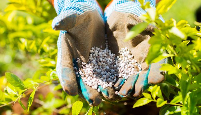 日本の土は、酸性雨の影響によって酸性に傾いていますが、多くの植物は中性からアルカリ性を好みます。苦土石灰は土をアルカリ性に傾ける効果があり、土に苦土石灰を混ぜることによって中性やアルカリ性にすることができます。  また、石灰には植物の根を強くする効果があり、苦土(マグネシウム)は葉の葉緑素を形成するときに必須の要素です。これが欠けると下葉から黄色くなって枯れていきます。
