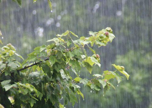 〜穀雨〜  春の雨が降る頃です。作物の生長を助ける天からの雨です。4月末から5月5日の立夏頃に春夏野菜の苗を植え付けましょう。  ※春分、夏至、秋分、冬至などでおなじみの季節をあらわす二十四節気。季節と共に生長する植物たちにとってもゆかりの深い昔ながらの暦です。