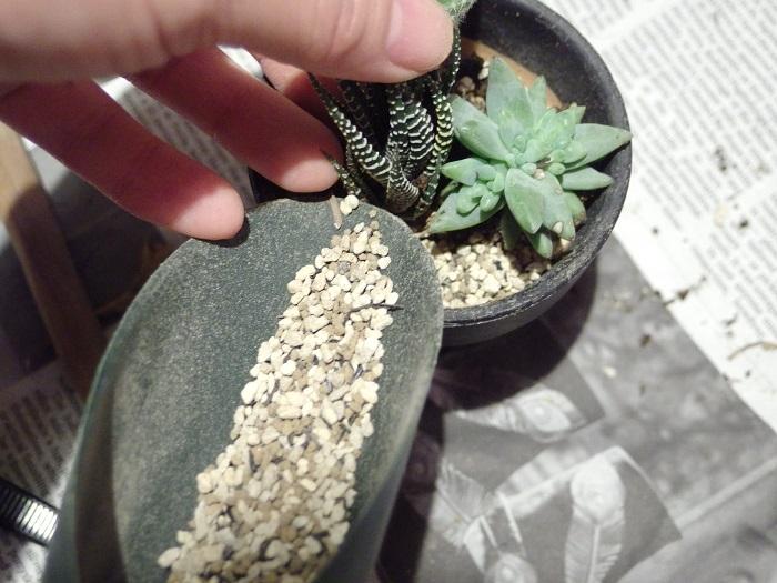 ③メインの多肉植物を決めよう  寄せ植えもただ寄せて植えるのではなく、メインの苗を決めて植えるとスムーズにまとまりやすくなると思います。  植えつける前にいろいろ配置をしてみるとよいです。メインになる苗を持って、土を流し入れます。高低差をつけたほうがまとまりが良くなりますので、ちょっと高さのあるものを先に植えても。