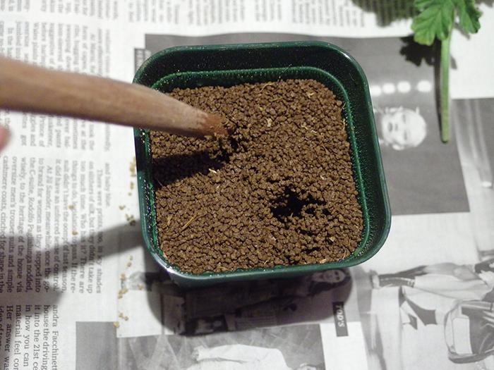 センテッドゼラニウム 挿し木の土
