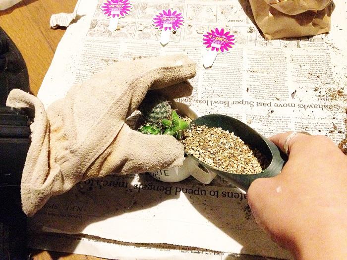 100均サボテン 寄せ植え