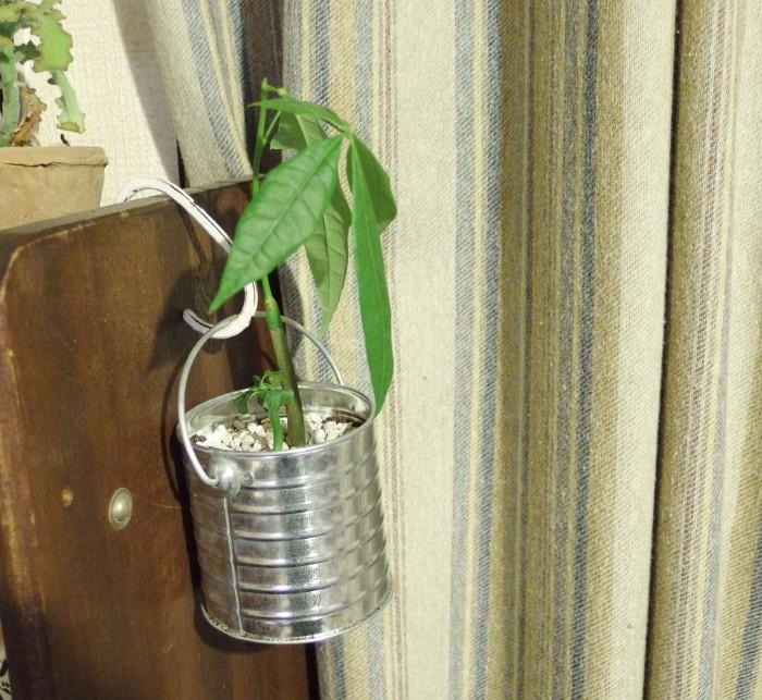 今回使ったバケツのように取ってがある鉢の場合は吊り下げることもできて便利です。