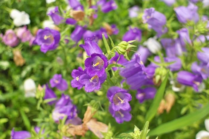 It was a beautiful flower.